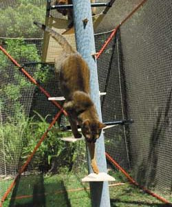 Cat Enclosure Accessories - Access Staircase and Scratch Posts