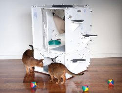 Cat Enclosures - Kits 4 Cats Complete